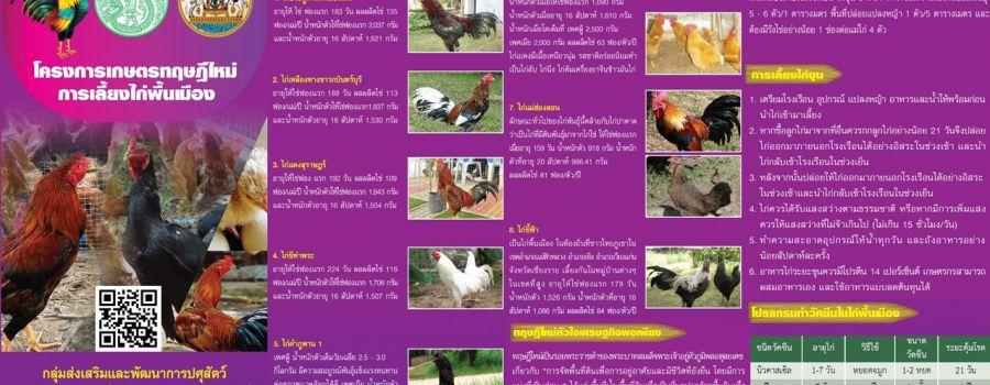 โครงการเกษตรทฤษฏีใหม่ การเลี้ยงไก่พื้นเมือง